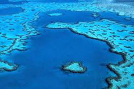 PROTECT OUR REEF – lets do this..